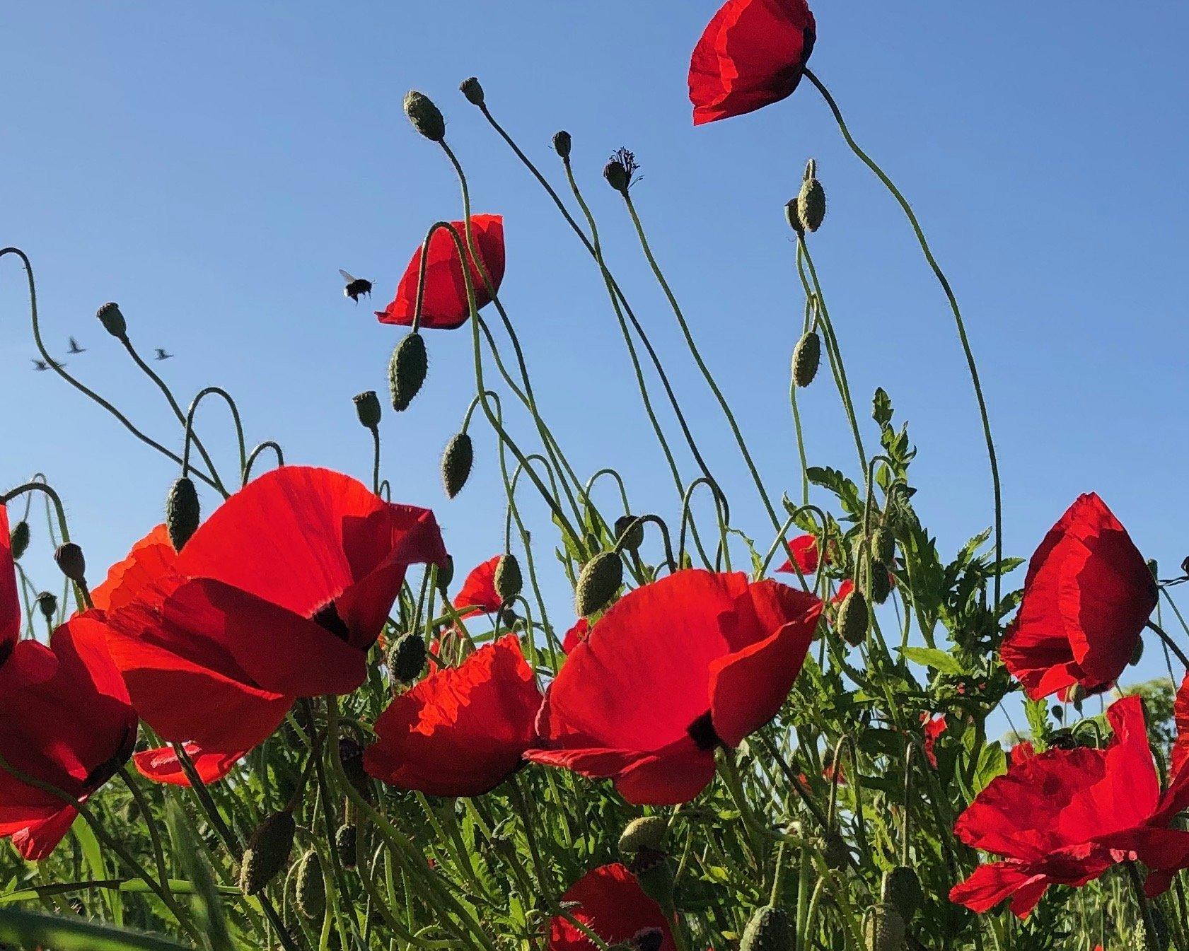 Blomst 5